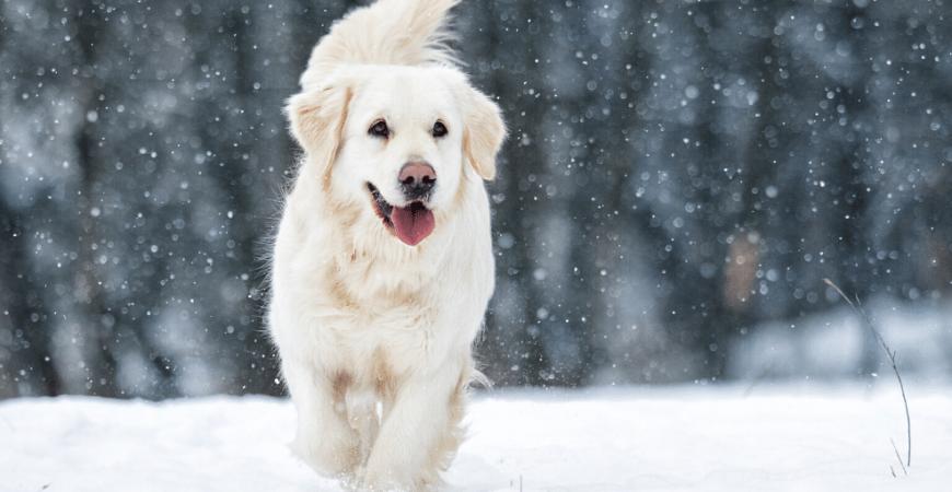 Come rafforzare le difese immunitarie del mio cane in modo naturale?