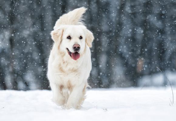 Comment renforcer les défenses immunitaires de mon chien de façon naturelle ?