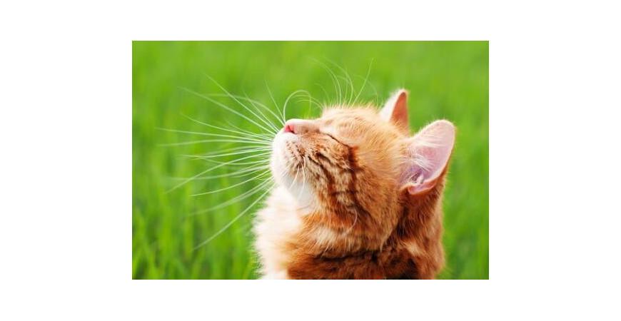 Fortifier naturellement le système immunitaire de son chat