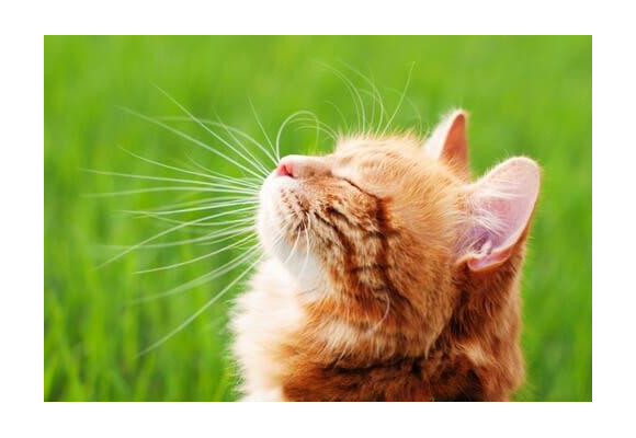 Naturally strengthen your cat's immune system