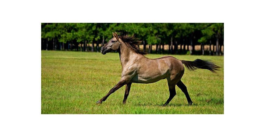 Prévenir et guérir l'allergie du cheval