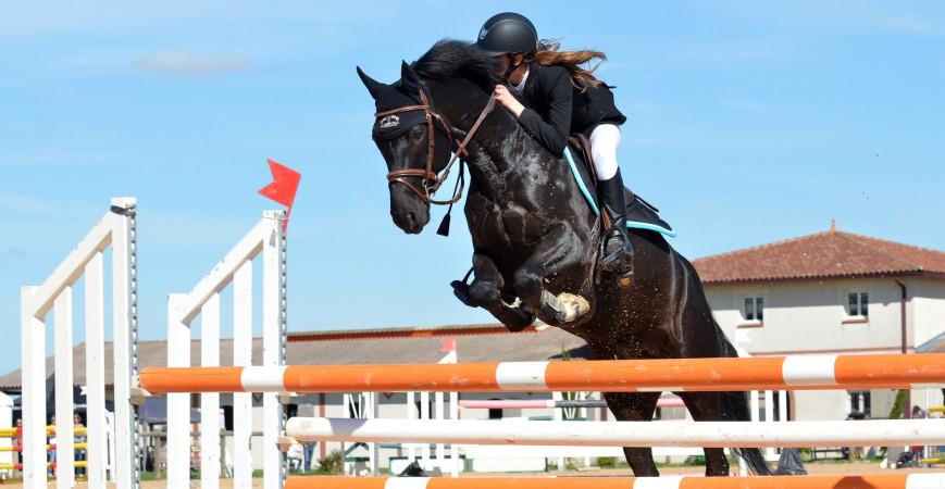 Les anabolisants naturels pour chevaux, une efficacité prouvée sans effets secondaires !