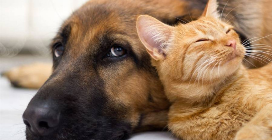 Natural phytotherapy solutions for dogs and cats