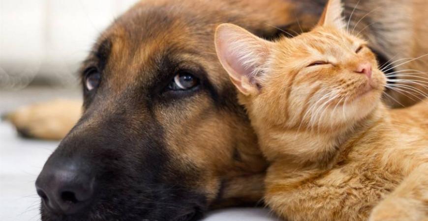 Les solutions naturelles de phytothérapie pour chien et pour chat