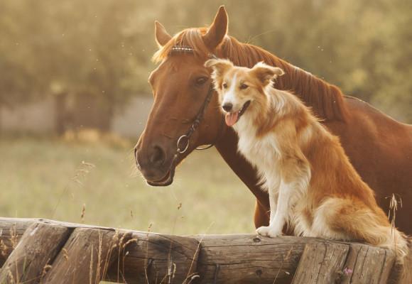 Come trattare in modo naturale i disturbi digestivi del cavallo?